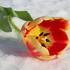Цветы на 8 марта!